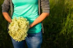 少妇采摘elderflower 免版税库存照片