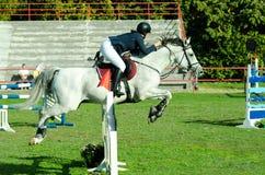 少妇骑师乘驾美丽的白马和跃迁在裤裆在马术运动 10月- 05日 2017年 novi哀伤的塞尔维亚 库存照片