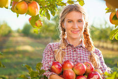 少妇从苹果树的采摘苹果在一个可爱的晴朗的总和 免版税库存图片