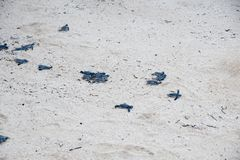 少年绿浪乌龟 免版税库存照片