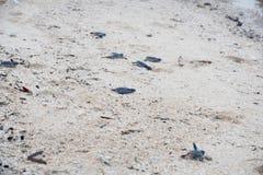 少年绿浪乌龟 免版税图库摄影