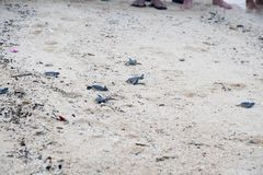 少年绿浪乌龟 库存照片