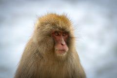 少年雪猴子画象 库存图片