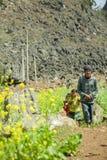少数族裔生和油菜领域的女儿 免版税图库摄影