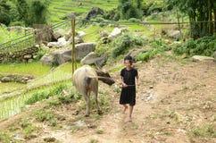 少数越南妇女和水牛 免版税库存图片