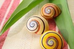 少见壳蜗牛 免版税库存照片