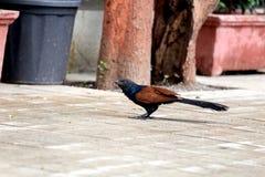 少见的鸟 免版税库存图片