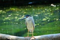 少见的鸟 免版税图库摄影