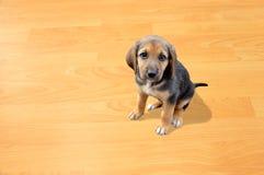 少许我的小狗 免版税库存照片