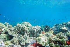 少许礁石 免版税库存照片