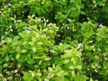 少许紫色与绿色叶子 库存照片