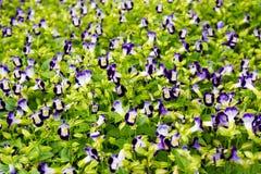 少许紫色花 库存照片