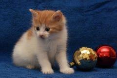 少许红色和白色小猫shorthair猫 免版税库存照片