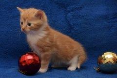 少许红色和白色小猫shorthair猫 库存照片
