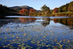 少许长的池塘 免版税库存照片