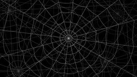 少量蜘蛛网移动反对黑背景 股票视频