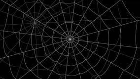 少量蜘蛛网移动反对黑背景 影视素材