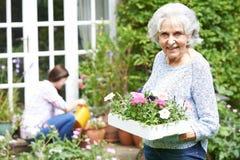 少年孙女帮助的祖母在庭院里 图库摄影