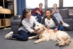 少年获得乐趣与金毛猎犬狗一起户内,有的少年乐趣概念 库存图片