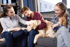 少年获得乐趣与金毛猎犬狗一起户内,有的少年乐趣概念 免版税图库摄影