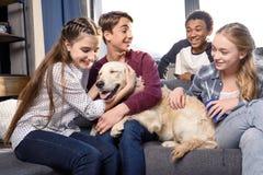 少年获得乐趣与金毛猎犬狗一起户内,有的少年乐趣概念 库存照片