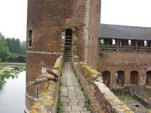贝尔塞尔城堡 免版税库存图片