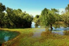 巴尔干最大的dsc湖montenegro skadar索尼 免版税图库摄影