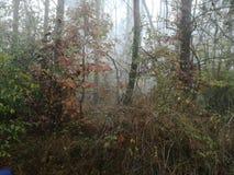 巴尔干森林 免版税库存照片