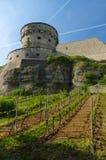 维尔茨堡,德国- 2015年5月11日:Marienberg堡垒或Festung的看法在秋天与葡萄园前面的 免版税库存照片