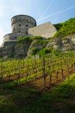 维尔茨堡,德国- 2015年5月11日:Marienberg堡垒或Festung的看法在秋天与葡萄园前面的 免版税库存图片