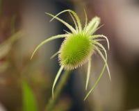 尖刻的绿色植物 免版税库存图片