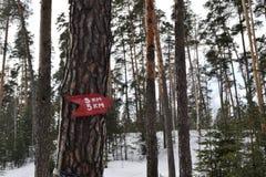 尖在森林里 免版税库存照片