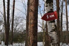尖在森林里 库存照片