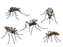 尖酸的蚊子 库存照片