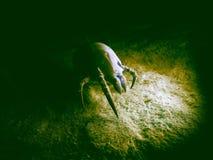 尘土小蜘蛛 向量例证