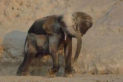 洗尘土浴的大象 库存照片