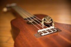 尤克里里琴青蛙 免版税库存照片