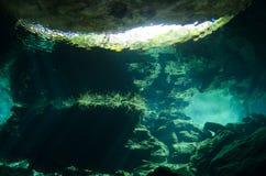 尤加坦Cenotes 免版税库存图片
