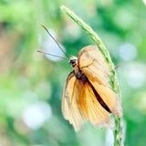 尼亚加拉橙色硫磺2016年 库存照片