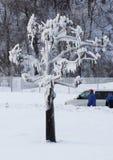 尼亚加拉瀑布在冬天-结冰的树 图库摄影