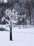 尼亚加拉瀑布在冬天-结冰的树 免版税库存图片