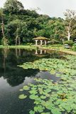 尼加拉瓜自然 免版税图库摄影