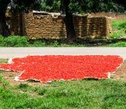 尼日利亚在夏天 图库摄影