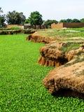 尼日利亚在夏天 免版税库存照片