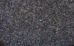 尼日尔种子 免版税库存照片
