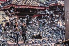 尼泊尔加德满都Durbar广场数千鸽子 免版税库存照片