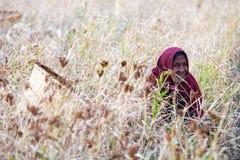 尼泊尔妇女 图库摄影