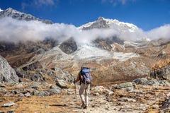 尼泊尔徒步旅行者蓝塘里壤峰 图库摄影
