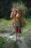 尼泊尔牲口的男孩运载的饲料 免版税图库摄影