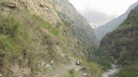 尼泊尔道路的背包徒步旅行者在马纳斯卢峰山附近 影视素材
